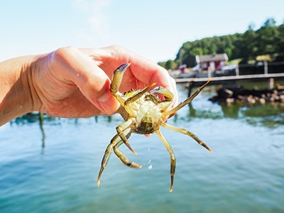 Crab-Hunting-Activity