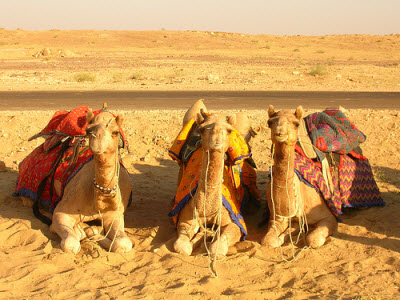 camel ride tour dubai